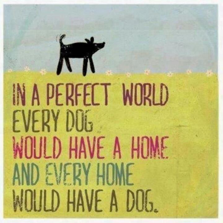 pefect world dog