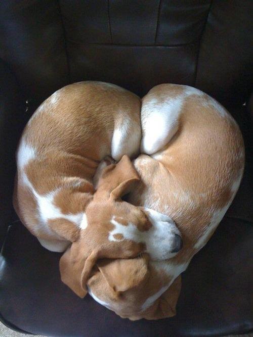 heart dogs 2