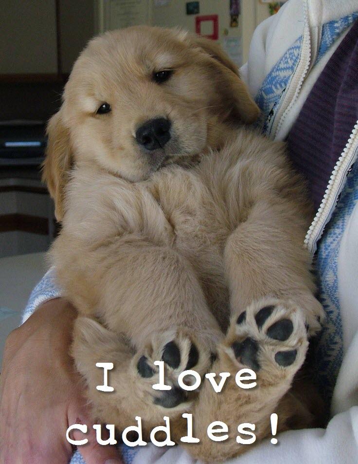 chubs pup