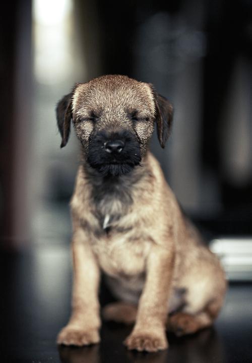 blur puppy