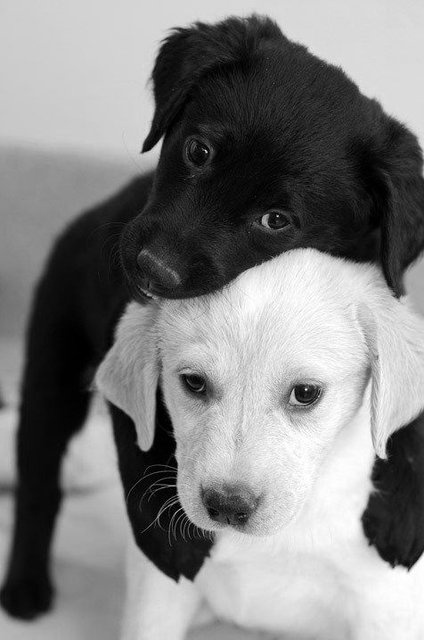 bw puppy love