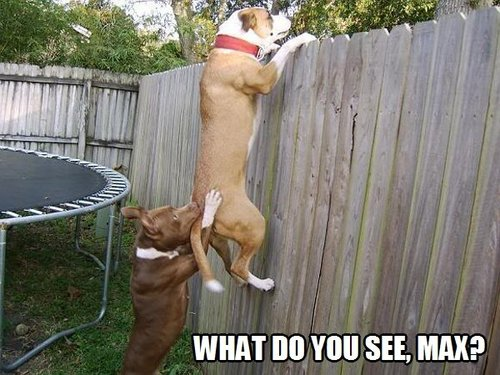 dogs and fence