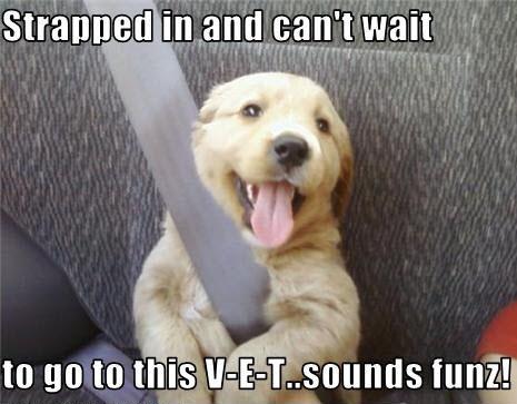 go to vet LOL