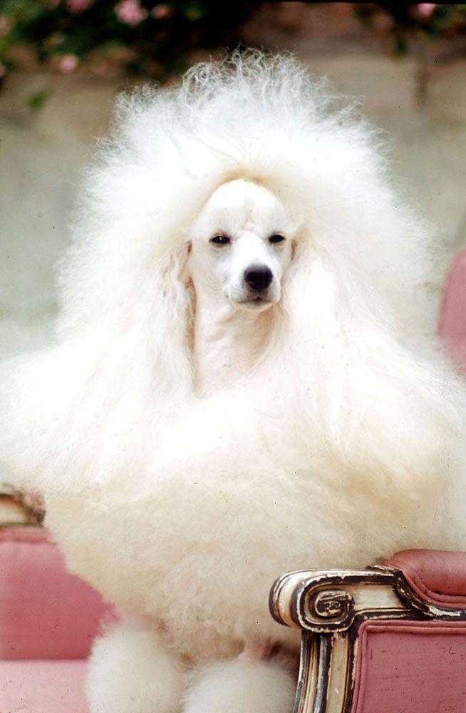hairdo alert