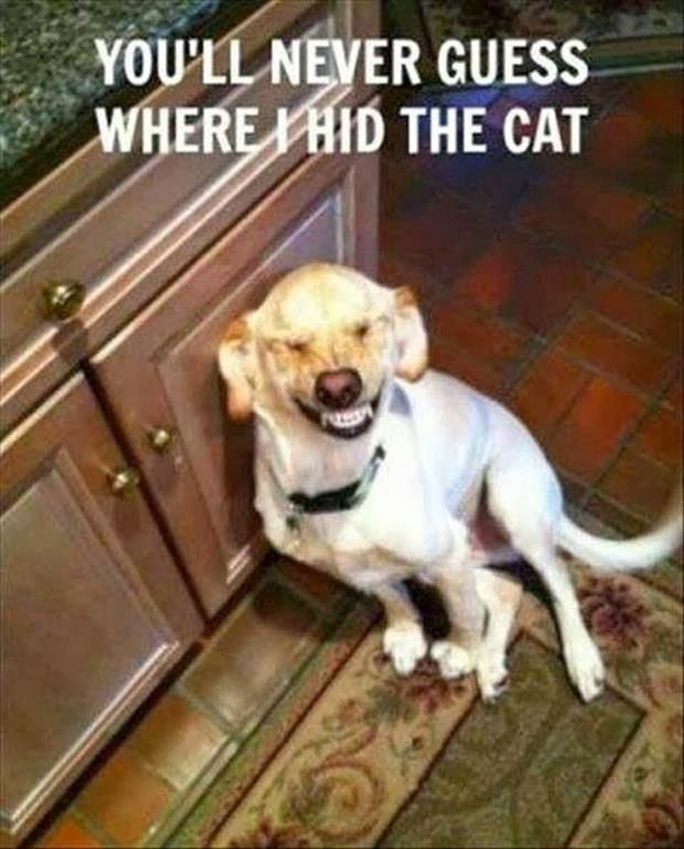 hid the cat