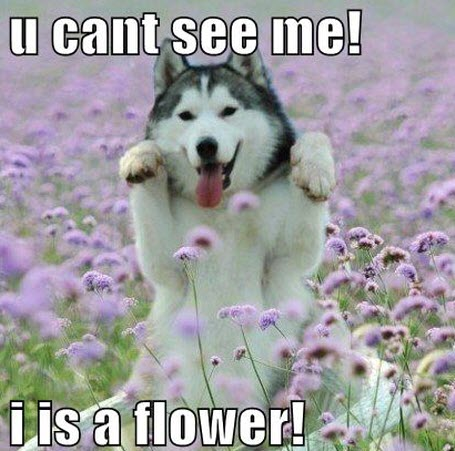 i is a flower