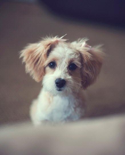 omg cute pup