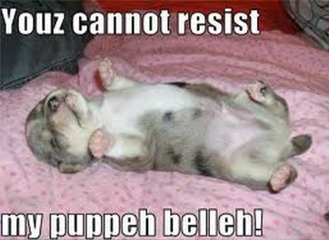 puppy belly