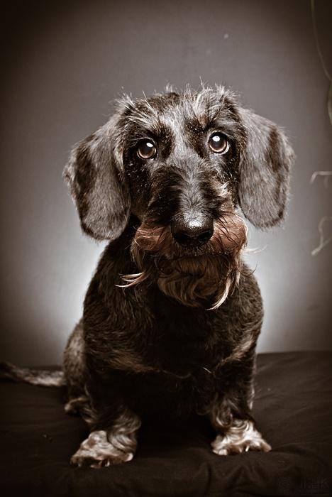 charcater dog
