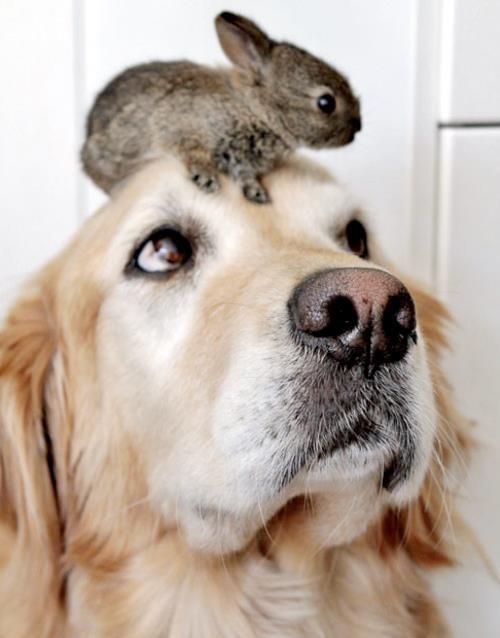dog and bunny