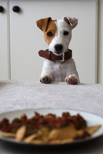 doggie deserves dinner