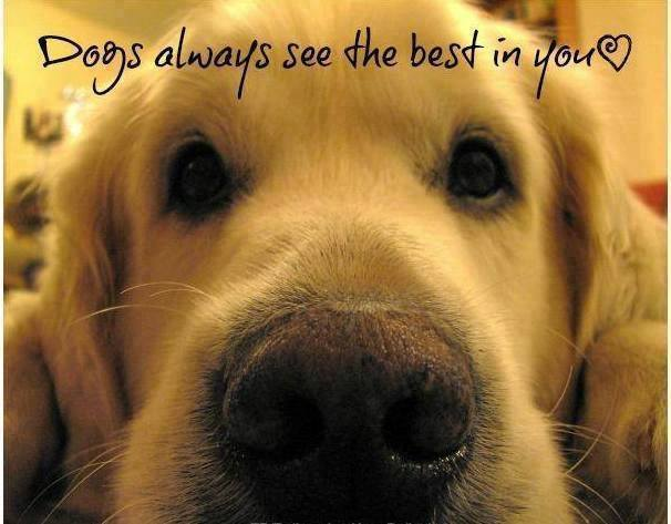 dogs see the best