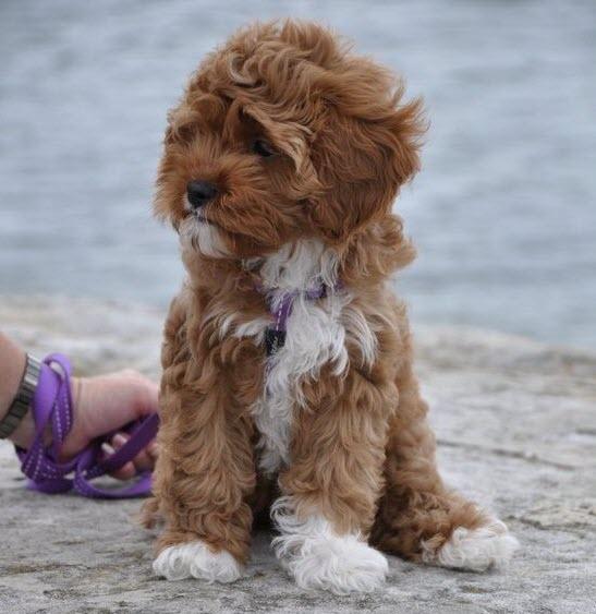 windy pup