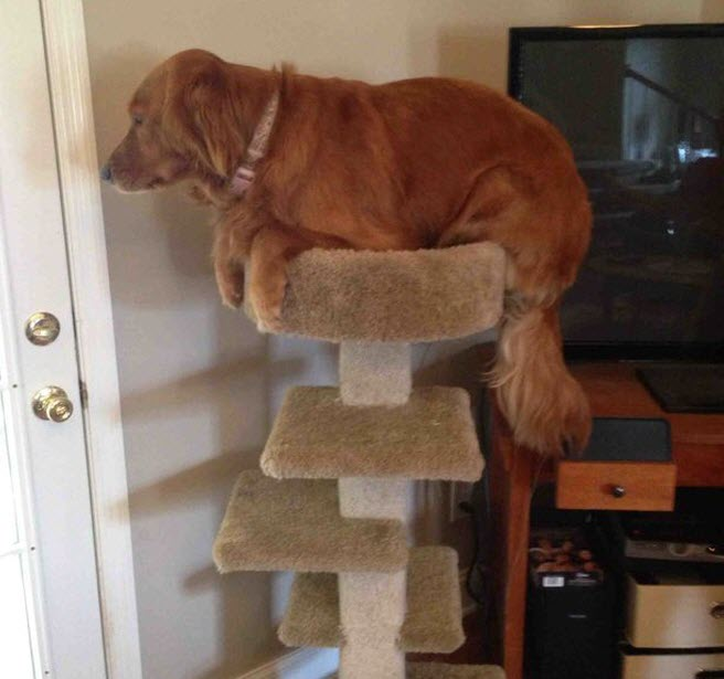 dog trying out what it's like to be a cat