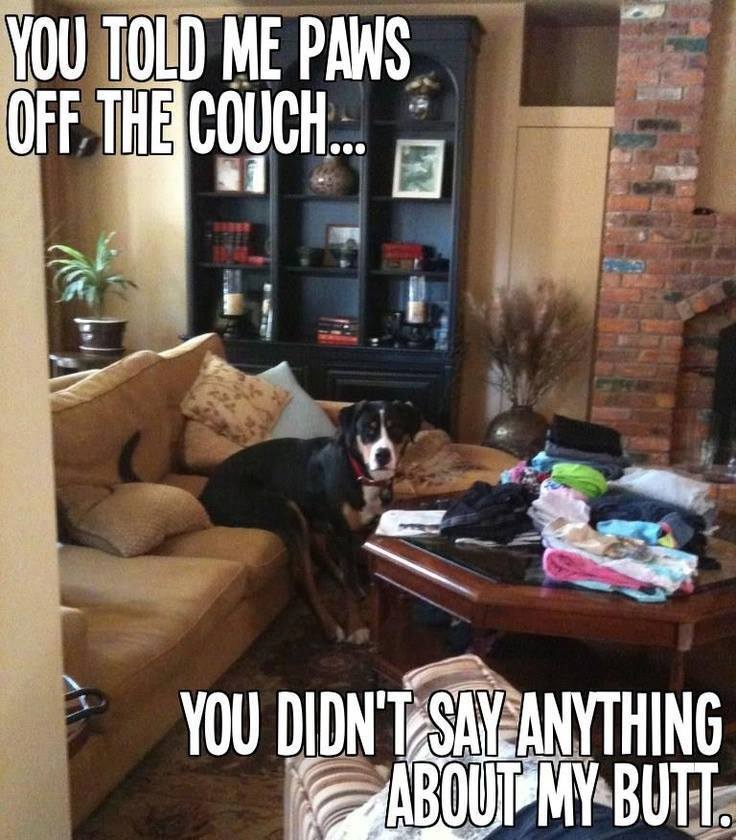 paws off the couch