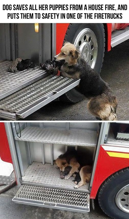 saved from fire